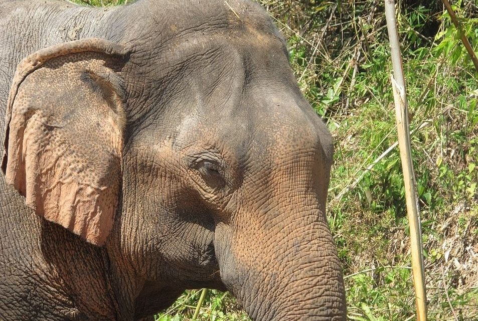 India Has Opened Its First Hospital Just for Elephants