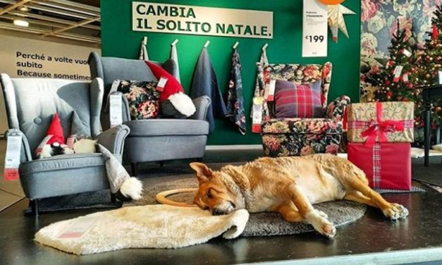 This Awesome IKEA Store Lets Stray Dogs Nap on the Furniture