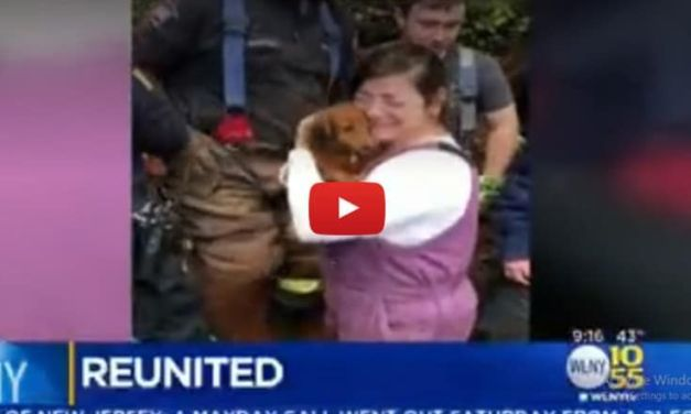 Dog Trapped in Pipe for 24 Hours Reunites with Teary-Eyed Guardian