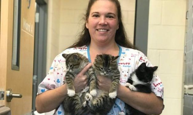 Three Abandoned Kittens with No Eyelids Get Second Chance at Life