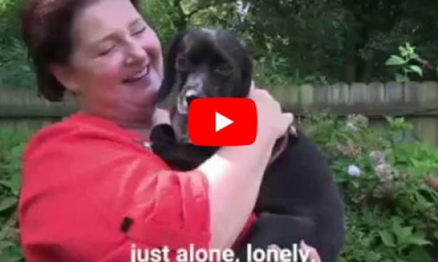 VIDEO: Dog with Chain Embedded in His Neck Finally Knows What it Feels Like to be Loved