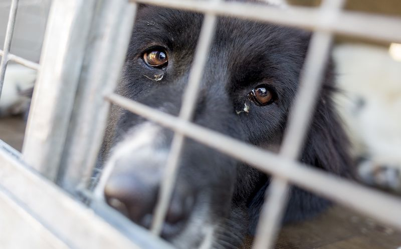 SIGN: Stop Deadly VA Paralysis Experiments on Dogs