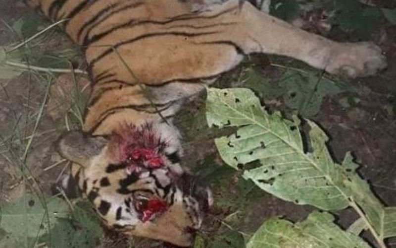 SIGN: Justice for Tiger Run Over with Tractor and Beaten to Death