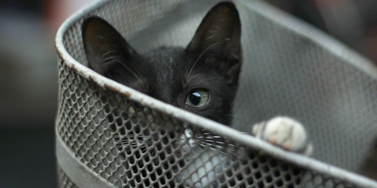SIGN: Justice for Cat Trapped in Cage and Kicked into Pond to Drown