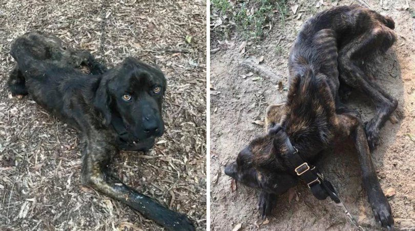 UPDATE: Woman Who Starved Ex-Boyfriend's Dog Out of Spite Faces Felony Charges
