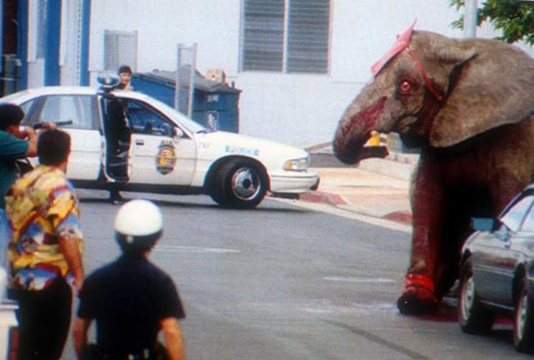 Hawaii Finally Bans Exotic Animal Acts, 25 Years After The Death Of Tyke The Elephant