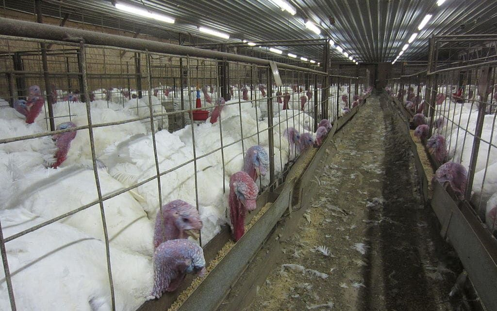"""Iowa """"Ag Gag"""" Law Criminalizing Undercover Animal Cruelty Investigations Struck Down"""