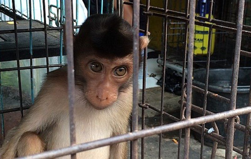 SIGN: Stop Kidnapping Baby Monkeys for Tourist Selfies