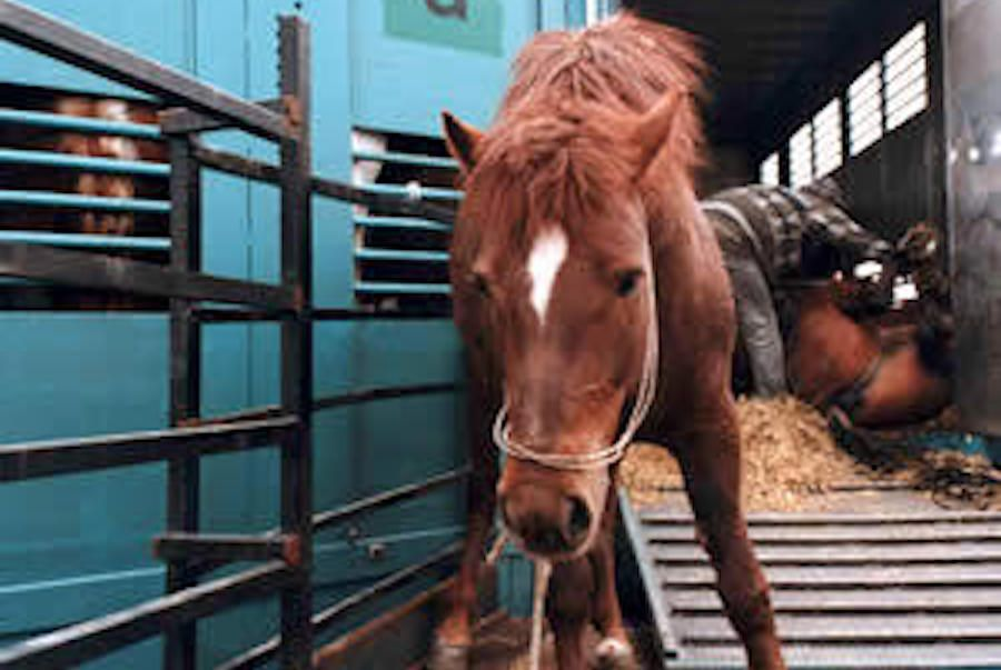SIGN: Ban the Brutal Slaughter of America's Wild Horses