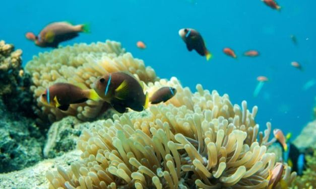Key West Looks To Slow Coral Reef Damage With New Sunscreen Ban