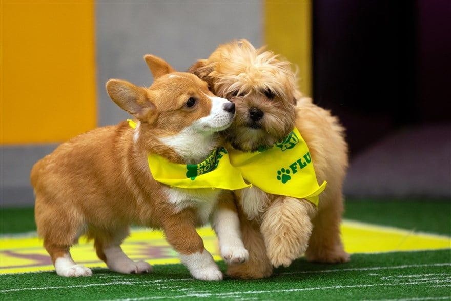 The Irresistible Rescue Dogs of Puppy Bowl 2019 Have Just Been Announced
