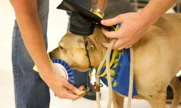 This Former Death-Row Pit Bull Now Has A 'PhD'