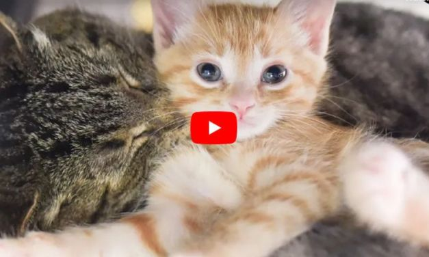 VIDEO: Rescued Feral Senior Becomes the Best Cat Grandpa Ever