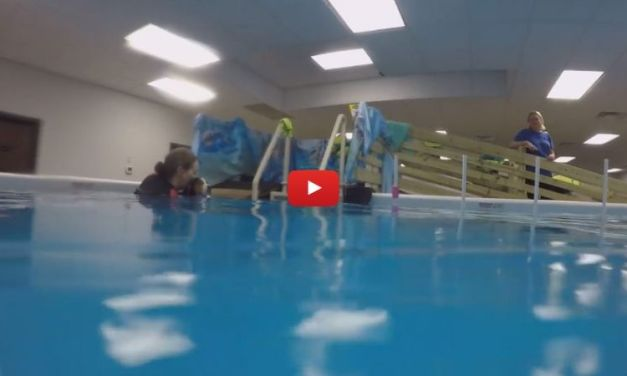 VIDEO: Dog Born With 'Upside-Down Paws' Learns to Swim After Surgery