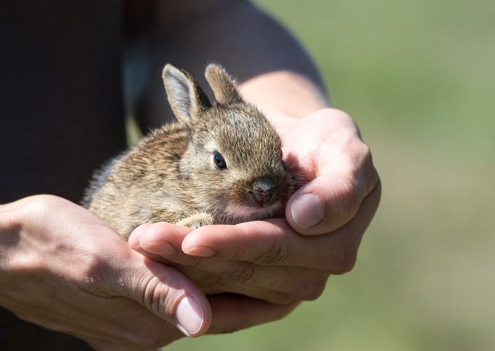 Wildlife Emergency Assistance Now Available With Easy Downloadable App