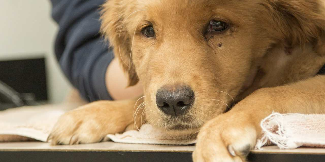 Sign: Toughen Penalties for Torturing Dogs and Cats in Arizona