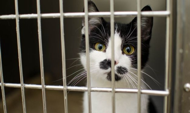 Campaign Urges USDA to Let Animals Used in Experiments Be Adopted, Not Euthanized