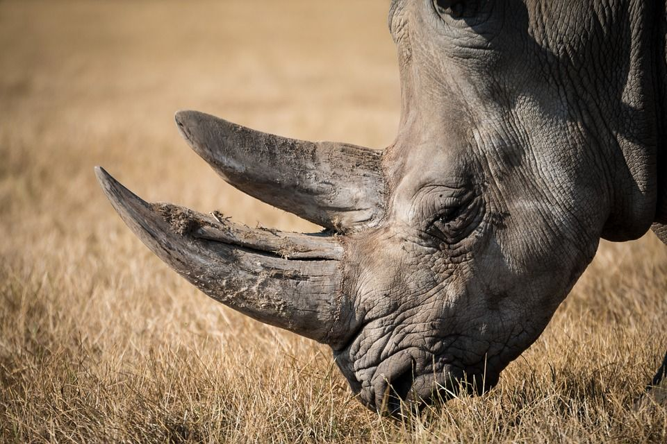 Poachers in Kenya Will Now Face the Death Penalty