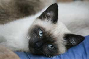 SIGN: Stop Serial Shooter Terrorizing the Cats of Oakland