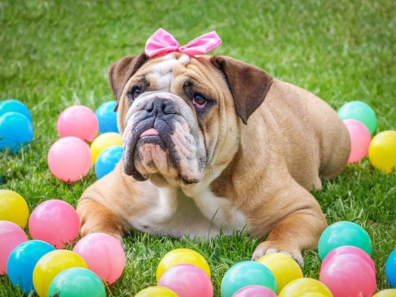 3 Easter Perils that Could Endanger Your Pet