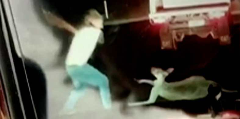 SIGN: Justice for Kangaroo Beaten with Board in Shocking Snapchat Video