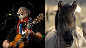 Willie Nelson rescues wild horses