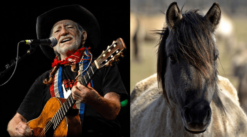 Willie Nelson Has Saved 70 Horses Once Doomed for Slaughter
