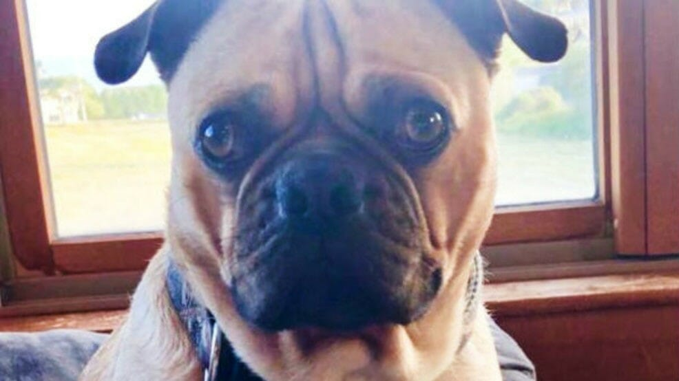 SIGN: Pass 'Franky's Law' to Give Abused Animals Advocates in Court