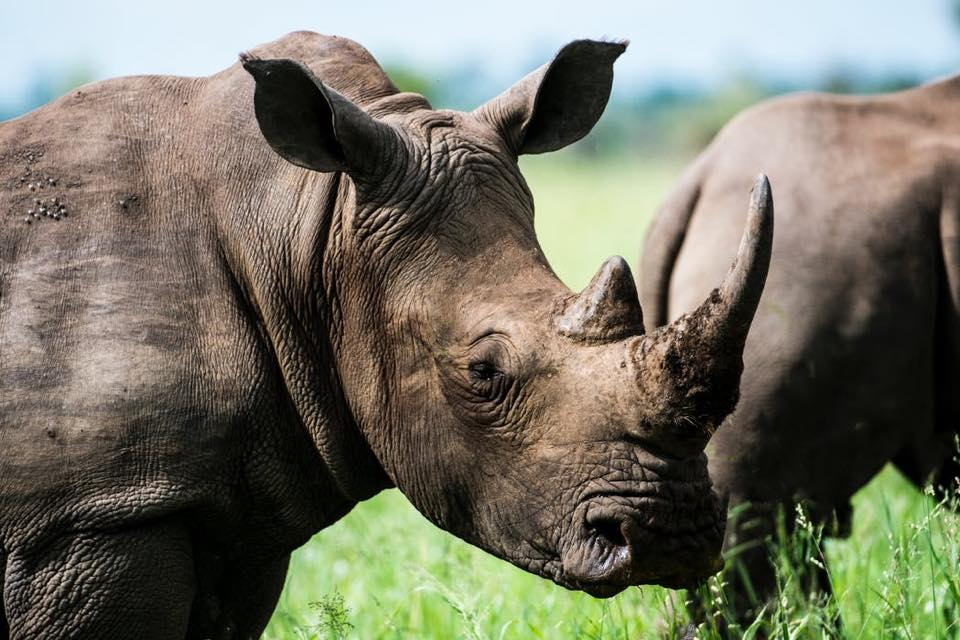 South African Poacher Sentenced to 22 Years in Prison
