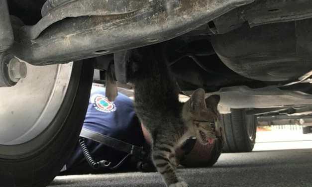 Hero Firefighters Save Kitten Stuck Under SUV