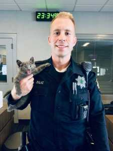Feisty kitten with police officer