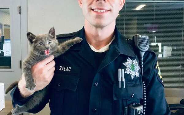 Rescued Kitten Poses Like A Wildcat in Photo with Officer Who Saved Her