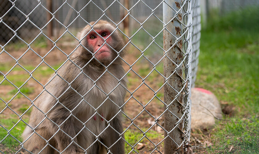 Over 200 Animals Rescued From A Roadside Zoo In Canada
