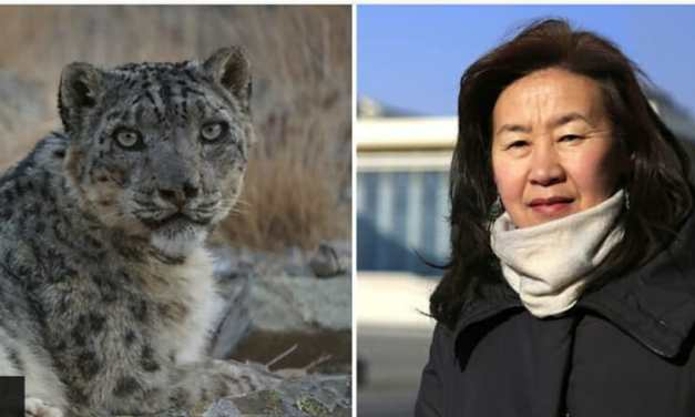 VIDEO: This Heroic Ex-Teacher Took On The Mining Industry to Save Rare Snow Leopards