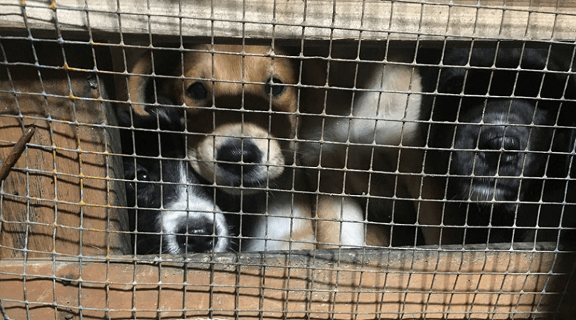 Good News! Indonesian District Pledges to Close All Dog Meat Stalls