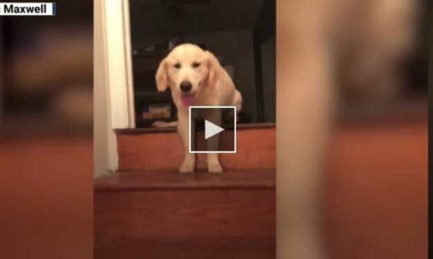 VIDEO: Puppy Learns to Walk Down Steps by Imitating Her 3-Legged Brother