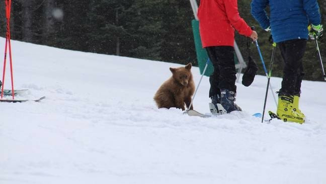 PETITION UPDATE: Friendly Bear Cub May Soon Be Released Back Into the Wild