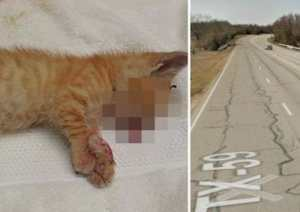 kitten thrown from highway