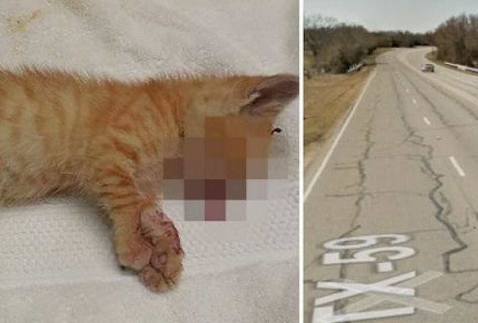 SIGN: Justice for Tiny Kittens Hurled from Truck at 70 Miles Per Hour