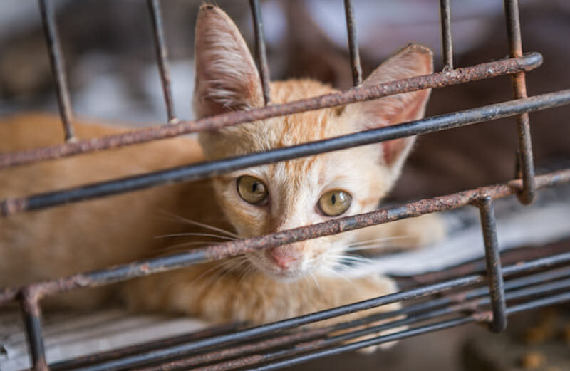 SIGN: Justice for 11 Cats and Dogs Left to Die in Abandoned House