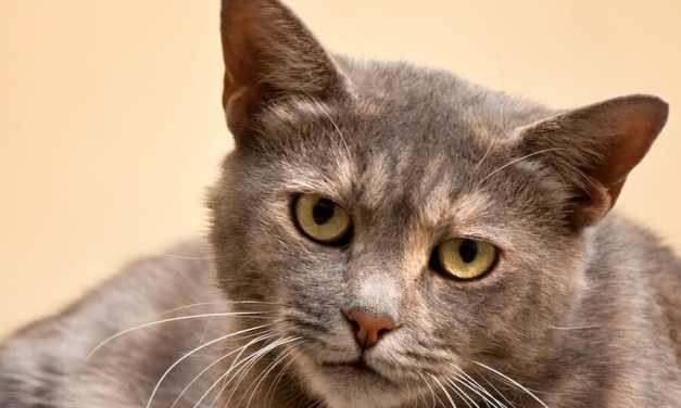 SIGN: Justice for Pickles, Cat With Firecrackers Strapped to Her Paw