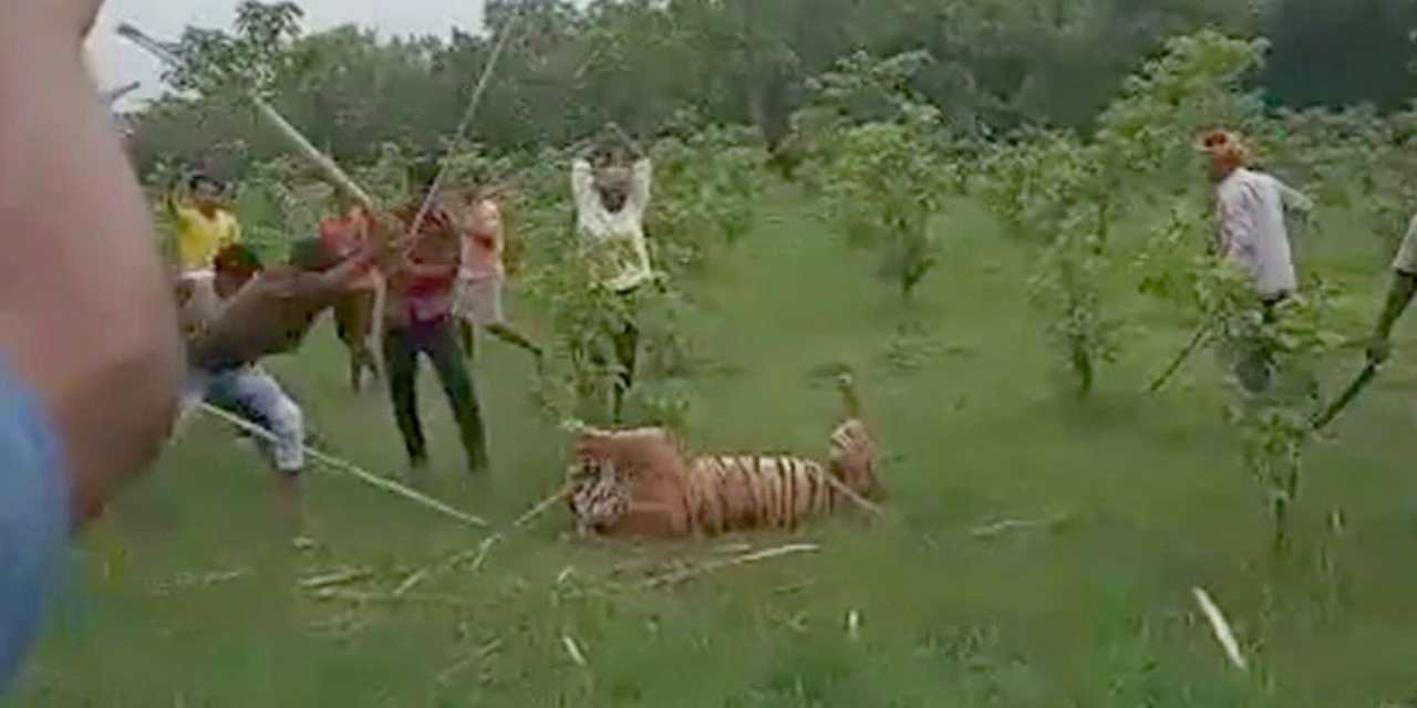 SIGN: Justice for Tiger Savagely Beaten to Death by Mob
