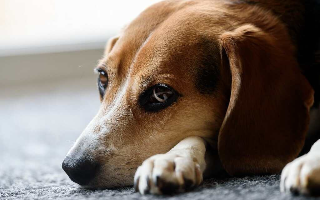 Pharma Company Sues FDA for Requiring Deadly Tests on Dogs