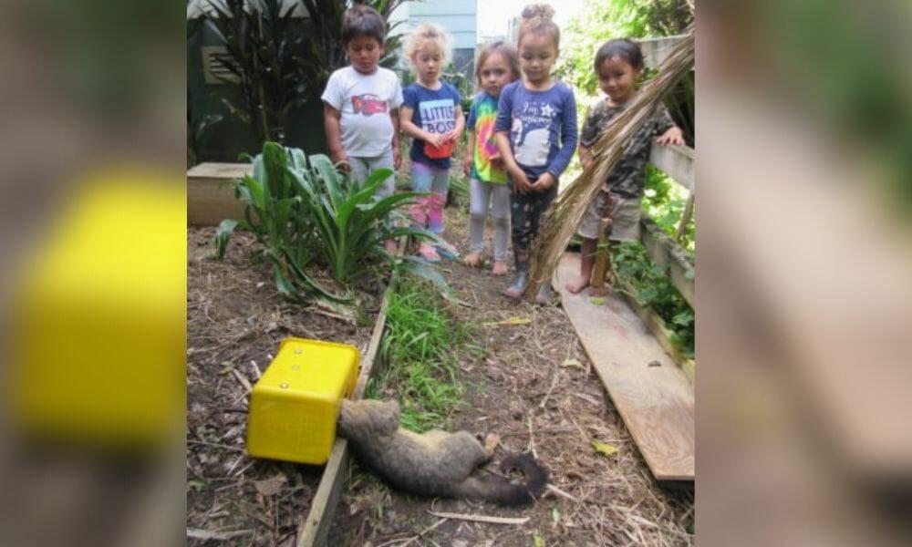 SIGN: Stop Teaching Children to Murder Animals in New Zealand