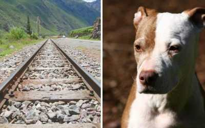 Dog train tracks