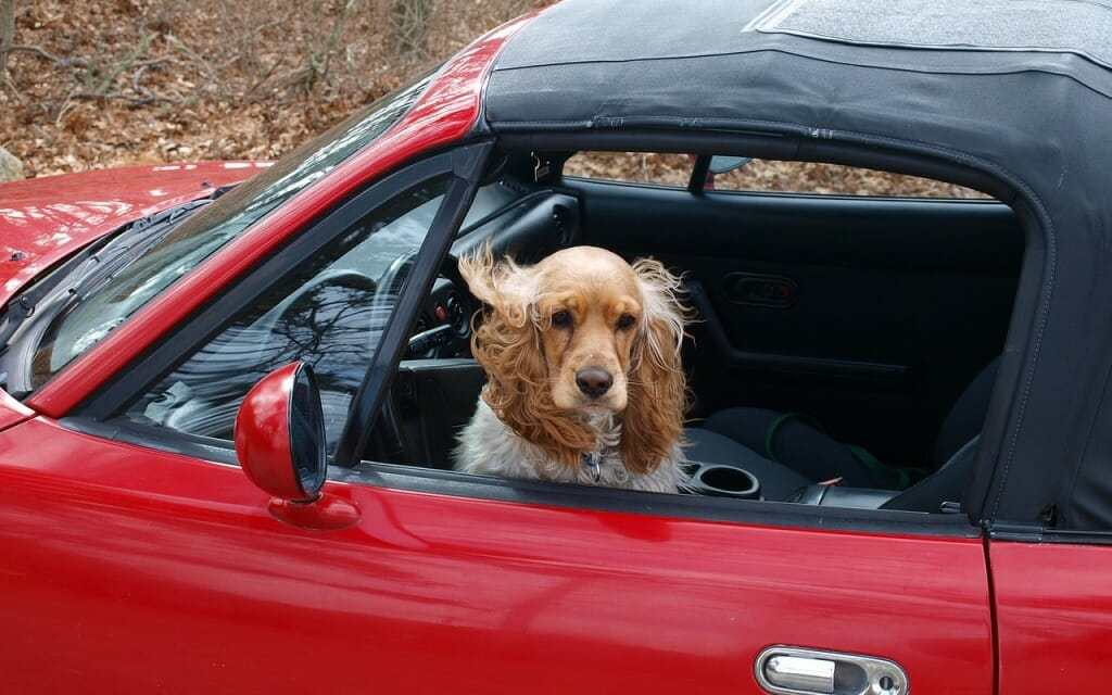 NY Firefighters Can Now Legally Save Dogs Trapped in Hot Cars