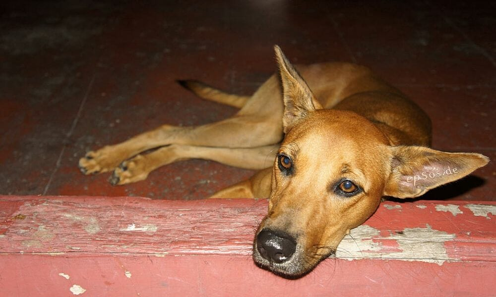 SIGN: Stop the Mass Poisoning of Dogs by Ruthless Gangs in S. Africa