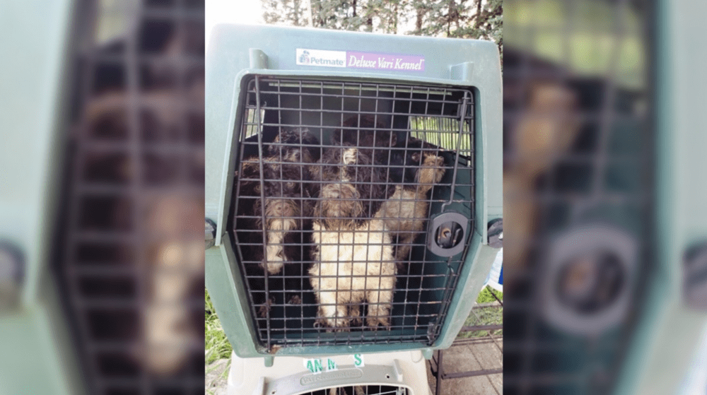 SIGN: Shut Down Puppy Mill of Horrors Full of Sick, Neglected Dogs