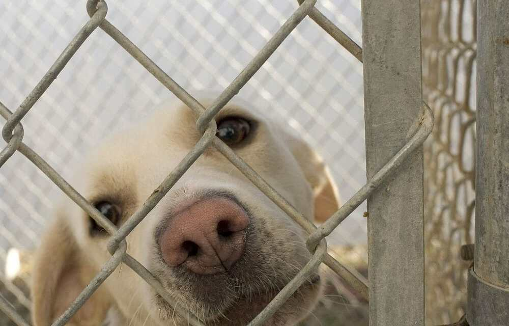 Michigan Is Now A 'No-Kill' State for Shelter Animals