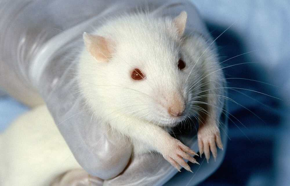 Victory! EPA Moves To Eliminate Cruel Animal Testing
